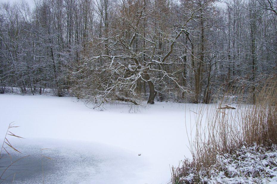 Broek winter 2008 066
