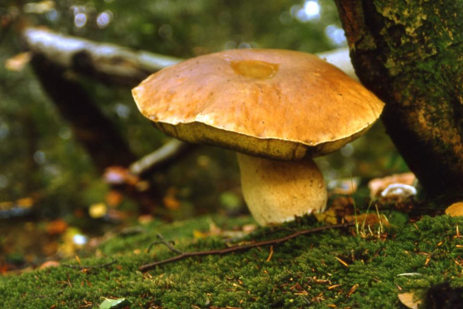 Foto 239 Gust Dias Eekhoorntjesbrood